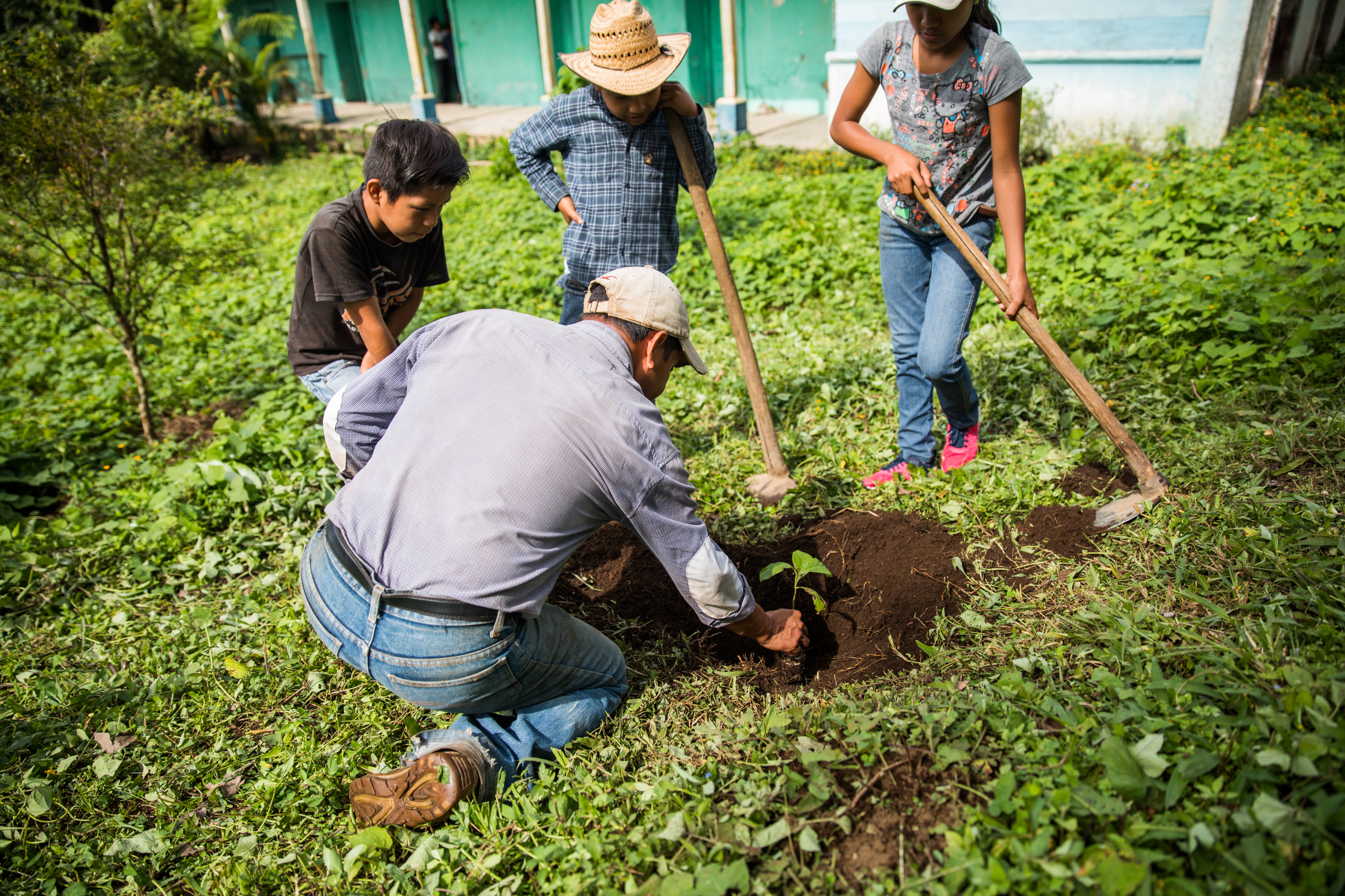 Planting Guatemala